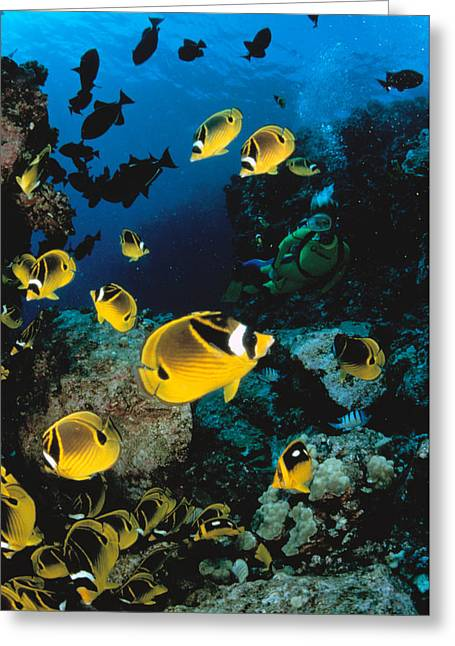 Snorkeling Photos Greeting Cards - Diver And Butterflyfish Greeting Card by Dave Fleetham - Printscapes