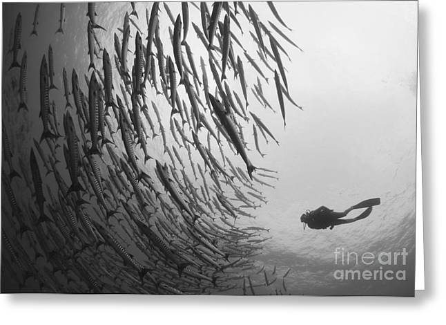 Diver And Schooling Blackfin Barracuda Greeting Card by Steve Jones