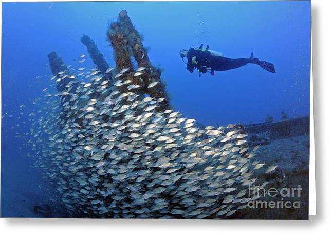 Diver And Schooling Fish On Wwii U-352 Greeting Card by Karen Doody