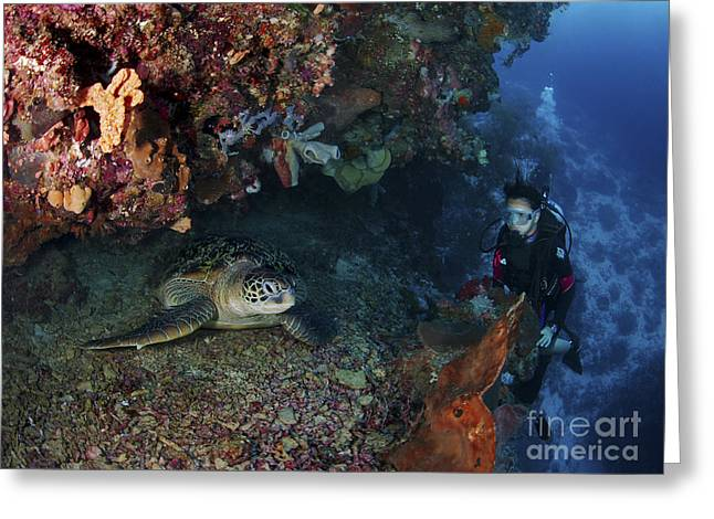 Scuba Divers Greeting Cards - Diver And Sea Turtle, Manado, North Greeting Card by Mathieu Meur