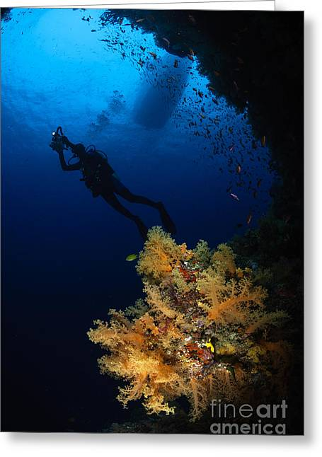 Undersea Photography Greeting Cards - Diver And Soft Coral, Fiji Greeting Card by Todd Winner