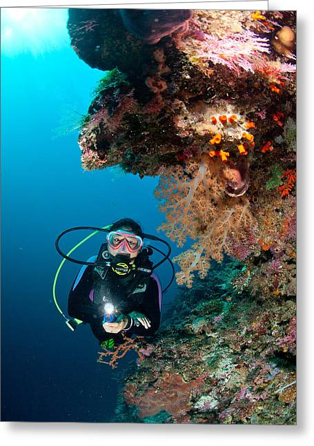 Torchlight Greeting Cards - Diver And The Soft Coral Greeting Card by Paul Cowell