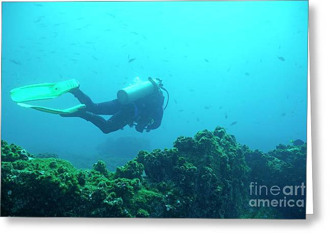 Diver By Rocks On Ocean Floor Greeting Card by Sami Sarkis