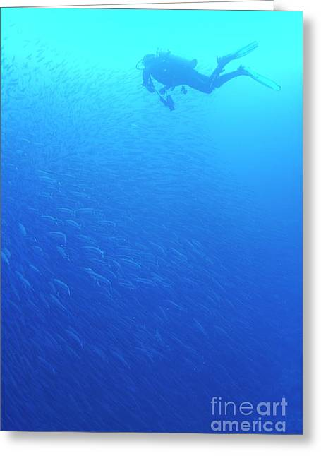 Diver By School Of Pelican Barracudas Greeting Card by Sami Sarkis