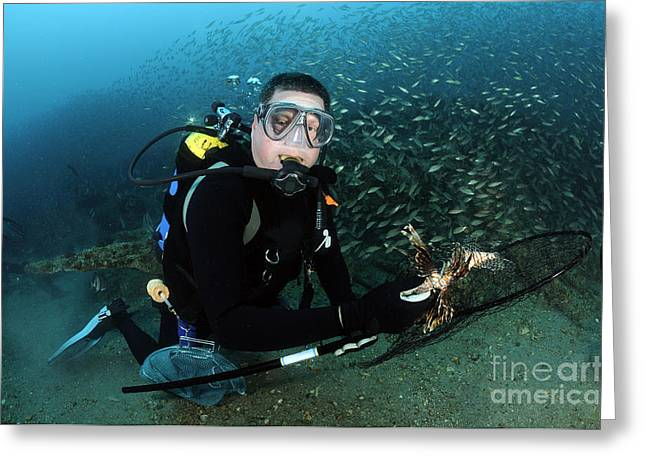 Oxygen Tank Greeting Cards - Diver Collects Invasive Lionfish Greeting Card by Karen Doody