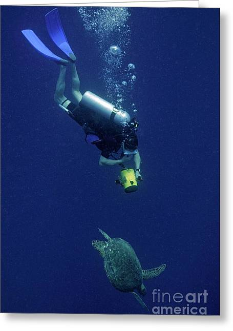 55-59 Years Greeting Cards - Diver filming Green Sea Turtle Greeting Card by Sami Sarkis