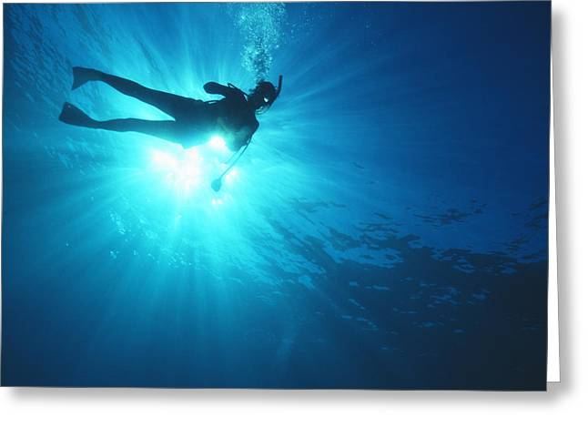 Diver On Mahi Wreck Greeting Card by Bob Abraham - Printscapes