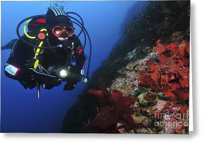 Scrutiny Greeting Cards - Diver On Wall With Red Algae Greeting Card by Mathieu Meur