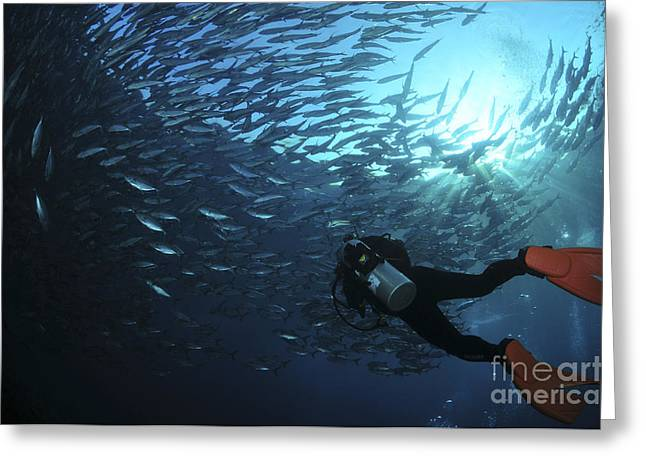 Oxygen Tank Greeting Cards - Diver Photographing A School Greeting Card by Mathieu Meur