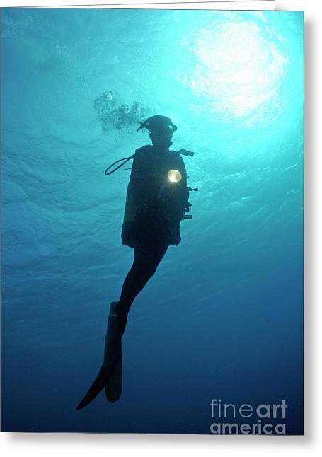Undersea Photography Greeting Cards - Diver shining torch by sunlight Greeting Card by Sami Sarkis
