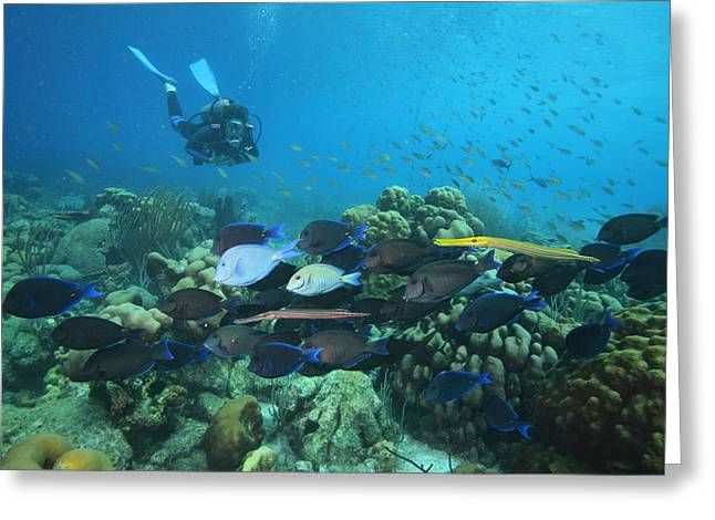 Diver Watching Blue Tangs, Doctorfish Greeting Card by George Grall