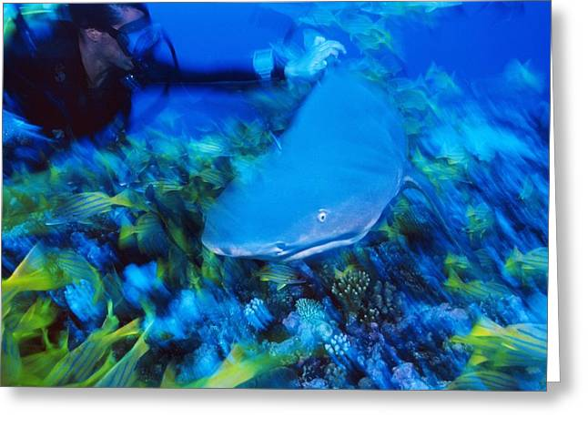 Many Greeting Cards - Diver With A Shark Greeting Card by Alexis Rosenfeld