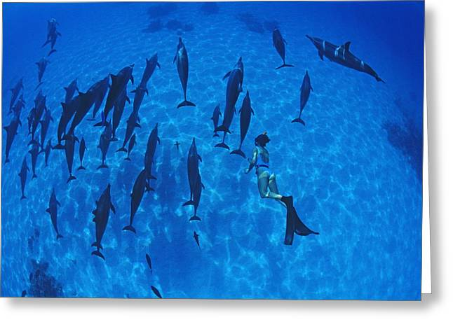 Spinner Dolphin Greeting Cards - Diver With Spinner Dolphins Greeting Card by Alexis Rosenfeld