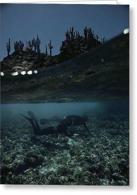 Aquatic Split Level Views Greeting Cards - Divers Explore Coral Off One Greeting Card by David Doubilet