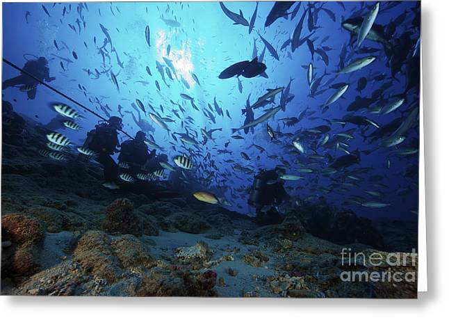 Undersea Photography Greeting Cards - Divers & Fish At Beqa Lagoons Premier Greeting Card by Terry Moore