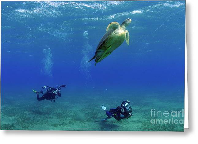Undersea Photography Greeting Cards - Divers photographing Green turtle Greeting Card by Sami Sarkis