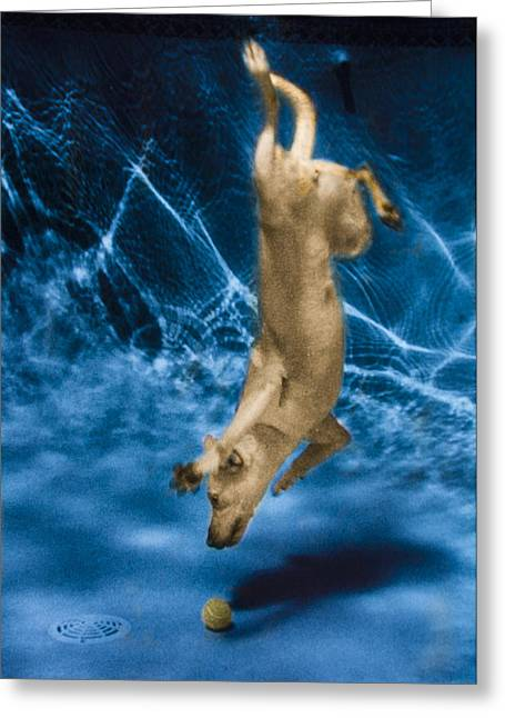 Diving Dog Greeting Cards - Diving Dog 2 Greeting Card by Jill Reger