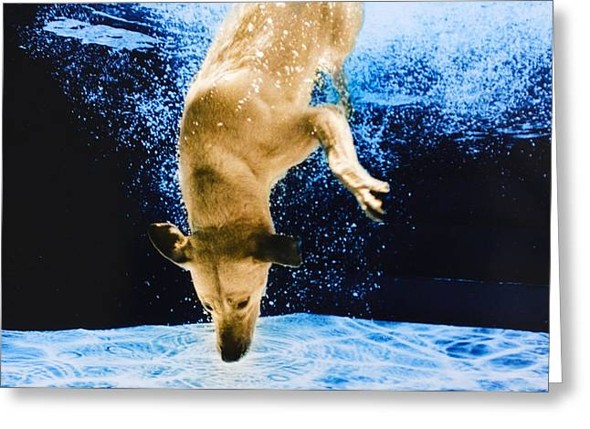 Diving Dog Greeting Cards - Diving Dog 3 Greeting Card by Jill Reger