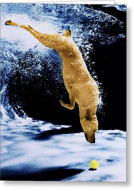 Diving Dog Greeting Cards - Diving Dog Greeting Card by Jill Reger