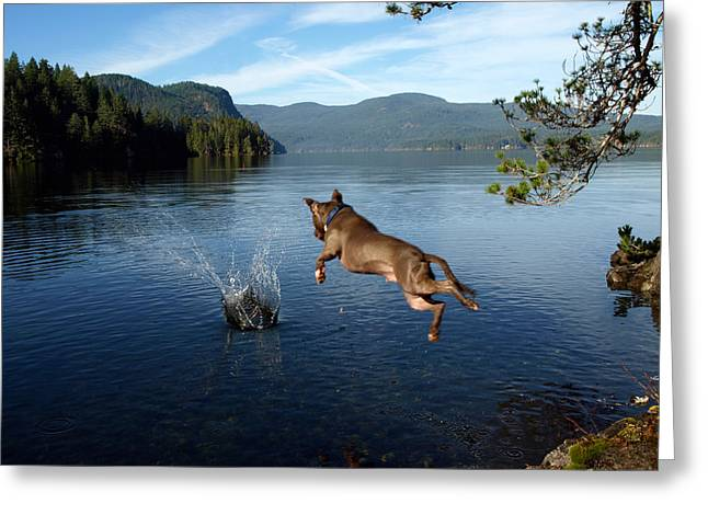 Diving Dog Greeting Cards - Diving Fool Greeting Card by Deanna Maxwell