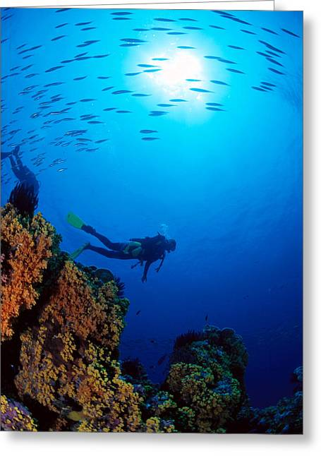 Snorkeling Photos Greeting Cards - Diving Scene Greeting Card by Ed Robinson - Printscapes