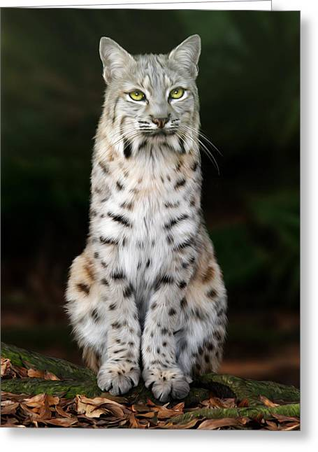 Bobcats Digital Art Greeting Cards - Divinity Greeting Card by Big Cat Rescue