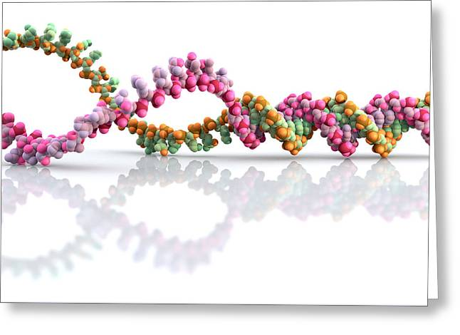 Unwind Photographs Greeting Cards - Dna Molecule Unwinding Greeting Card by Phantatomix