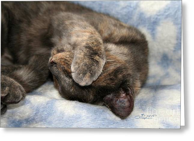 Napping Cat Greeting Cards - Do Not Disturb Greeting Card by Jutta Maria Pusl