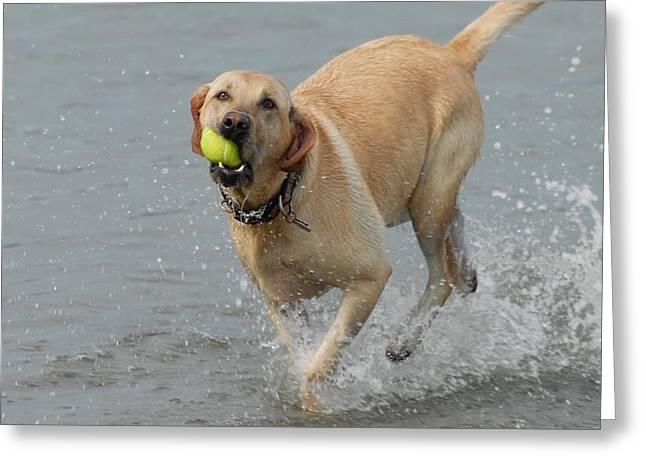 Litter Mates Greeting Cards - Dog 111 Greeting Card by Joyce StJames