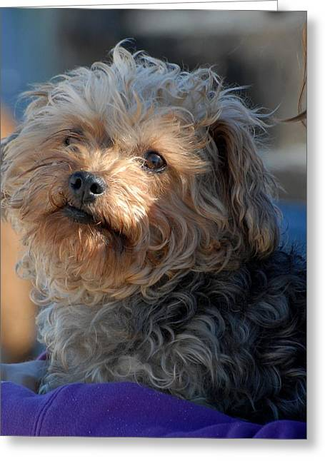Litter Mates Photographs Greeting Cards - Dog 49 Greeting Card by Joyce StJames
