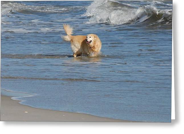 Dog Beach Card Greeting Cards - Dog 57 Greeting Card by Joyce StJames