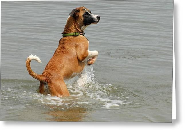 Dog Beach Card Greeting Cards - Dog 65 Greeting Card by Joyce StJames