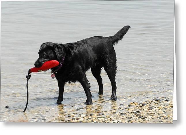 Dog 66 Greeting Card by Joyce StJames