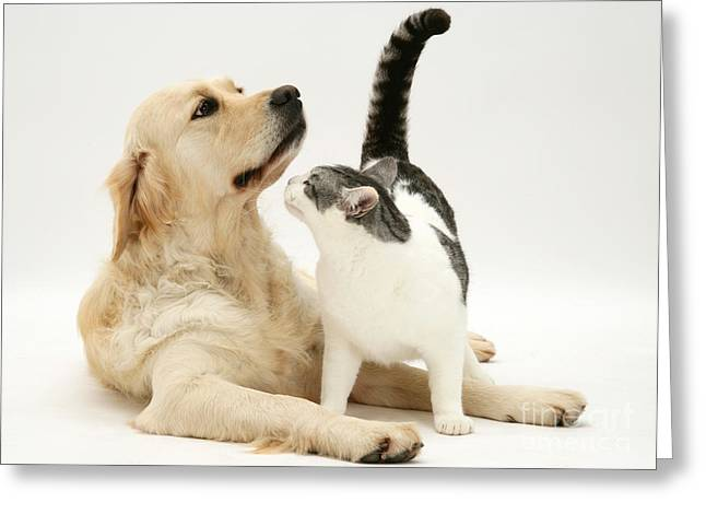 House Pet Greeting Cards - Dog And Cat Greeting Card by Jane Burton
