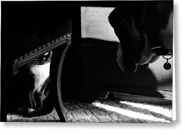 Guard Dog Greeting Cards - Dog and cat Greeting Card by Michael Mogensen