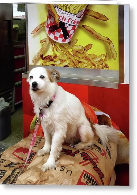 Potato Greeting Cards - Dog at Carnival Greeting Card by Susan Savad