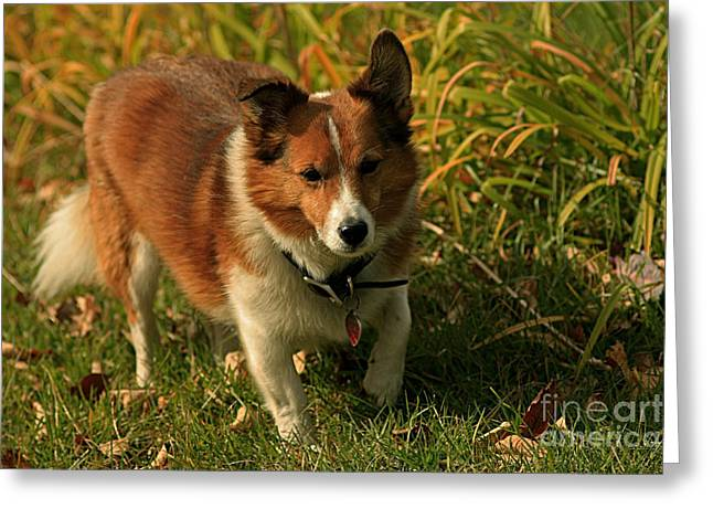 Dog At Play Greeting Cards - Dog at Play Greeting Card by Inspired Nature Photography By Shelley Myke