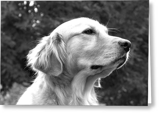 Monochromatic Greeting Cards - Dog black and white portrait Greeting Card by Sumit Mehndiratta
