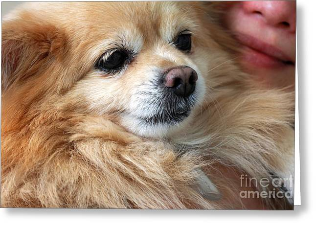 Woman Head Greeting Cards - Dog First Greeting Card by Charline Xia