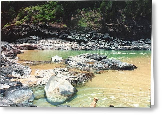 Kauai Dog Greeting Cards - Dog Gone Swimming Hole Greeting Card by Bruce Borthwick