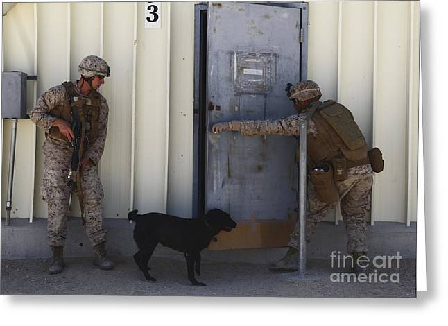 Dog Handler Greeting Cards - Dog Handlers Conduct Improvised Greeting Card by Stocktrek Images