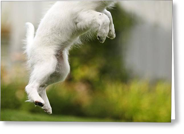 Animal Body Part Greeting Cards - Dog Jumps Greeting Card by Richard Wear