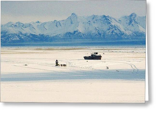 Iditarod Greeting Cards - Dog Musher at Cook Inlet - Alaska Greeting Card by Juergen Weiss