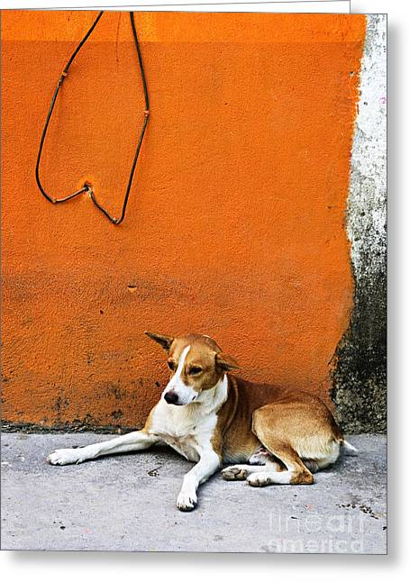 Dog Photographs Greeting Cards - Dog near colorful wall in Mexican village Greeting Card by Elena Elisseeva