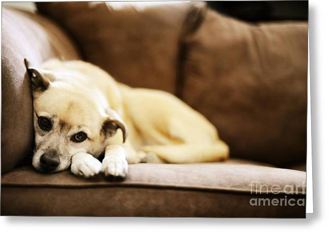 Dog On The Couch Greeting Card by HD Connelly