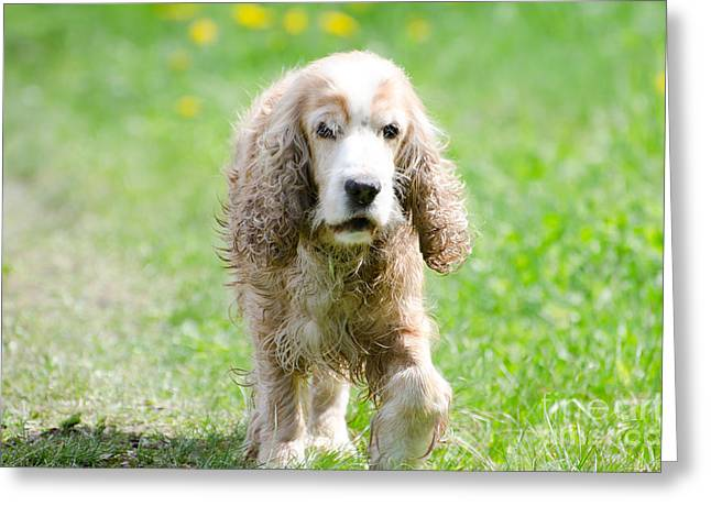 Dog Walking Photographs Greeting Cards - Dog on the green field Greeting Card by Mats Silvan