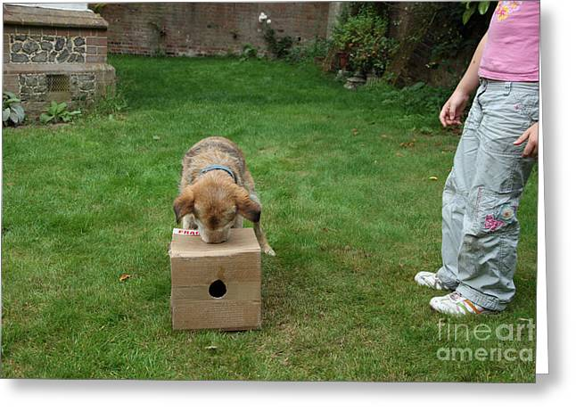 Home Owner Greeting Cards - Dog Playing Greeting Card by Mark Taylor