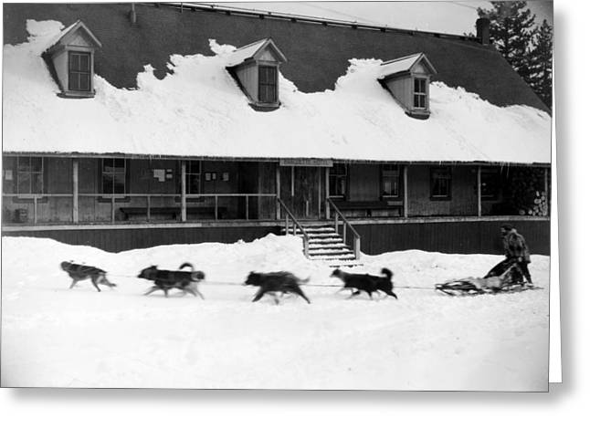 Husky Greeting Cards - Dog Sled Greeting Card by Granger