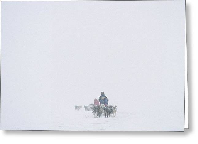 Dog Sledding Expedition In Storm Greeting Card by Gordon Wiltsie