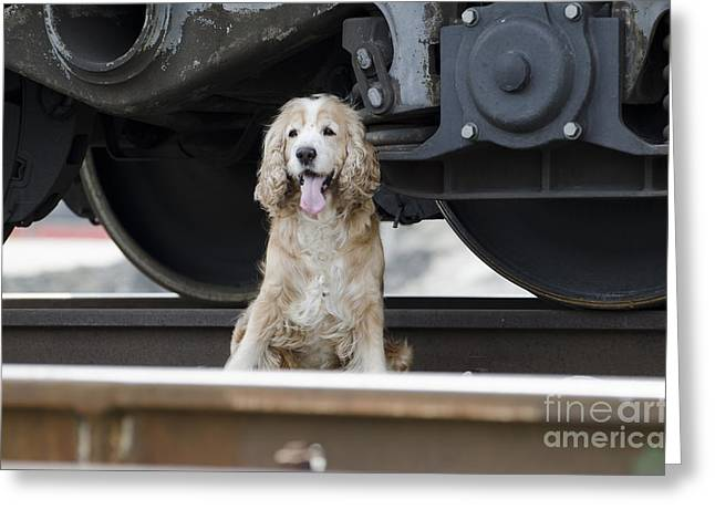 Abandoned Pets Greeting Cards - Dog under a train wagon Greeting Card by Mats Silvan